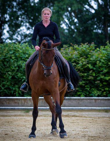 Tanja_Henkel_Dressur_Pferd_Unterricht